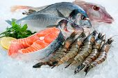 picture of shrimp  - Seafood on ice at the fish market - JPG