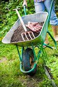 foto of humus  - gardener with a wheelbarrow full of humus in the garden - JPG