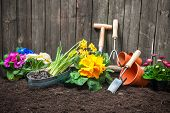 picture of plant pot  - Planting flowers in pot with dirt or soil at back yard - JPG