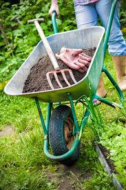 pic of humus  - gardener with a wheelbarrow full of humus in the garden - JPG