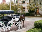 image of carriage horse  - Horse drawn carriage in historic St Augustine Florida - JPG