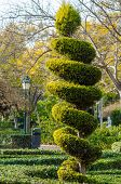 pic of tree trim  - Tall elegantly trimmed tree in a park  - JPG