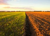picture of plowed field  - Plowed field in golden light - JPG