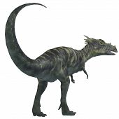 image of herbivore animal  - Dracorex was a herbivorous dinosaur that lived in the Cretaceous Period of North America - JPG