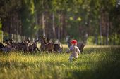 foto of pasture  - Little boy chasing goats on pasture - JPG