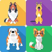 pic of collie  - Vector dog Rough collie - JPG