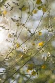 picture of buttercup  - wallpaper of meadow buttercups with sunshine shallow dof and flying water particle - JPG