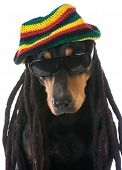 picture of dreadlock  - dog in costume  - JPG