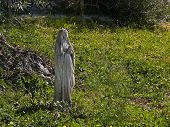 picture of mary  - Statue of Virgin Mary in a home garden Italy - JPG
