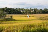 stock photo of marshes  - Brilliant Green Wetland Marsh Grass Growing Under Blue October Skies - JPG