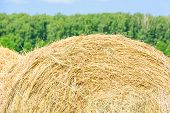 picture of hay bale  - Round bales of hay in the field - JPG