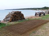 stock photo of reinforcing  - A wagon reinforce steel and pieces of holm oak wood  at the waterfront of  the island Olib in the Adriatic sea in Croatia - JPG
