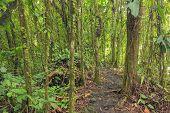 stock photo of rainforest  - Dense vegetation in rainforest of Costa Rica - JPG