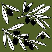 stock photo of olive branch  - Vector Illustration set of olive tree branches with fruits - JPG