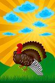 image of turkey-cock  - Turkey - JPG