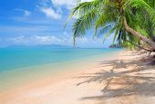 stock photo of summer beach  - beach with coconut palm and sea - JPG