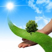 stock photo of environmental protection  - Hand - JPG