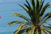 Beautiful Spreading Palm Tree, Exotic Plants Symbol Of Holidays, Hot Day, Big Leaves, Exotic Tree poster
