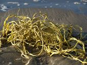 picture of mayhem  - A chaotic bunch of yellow rope washed ashore - JPG