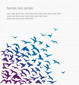 Vector background. a silhouette of a birds' flock