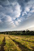 Beautiful Summer Sunset Landscape Image Of Ashdown Forest In English Countryside With Vibrant Colors poster