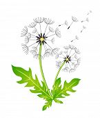 Dandelion. Vector illustration. In the wind. Color image. In the wind.