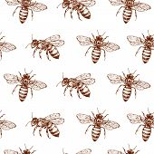 Honey Bee Seamless Pattern. Vintage Doodle Sketch Wrapping Vector Background. Illustration Of Bee In poster