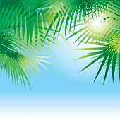 tropical vector background with leaves of palm trees
