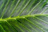 Close Up Of Palm Leave In The Palm House At Kew Gardens In London,uk.palm Leaves Background. poster