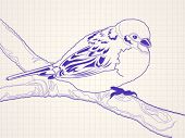 Hand drawn sparrow bird sitting on a branch - ballpoint pen drawing on a squared paper in a notebook
