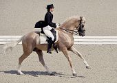 Young Elegant Rider Woman And Isabelline Horse. Beautiful Girl At Advanced Dressage Test On Equestri poster