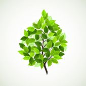 stock photo of green leaves  - branch with fresh green leaves - JPG