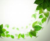 pic of green leaves  - branch with fresh green leaves - JPG