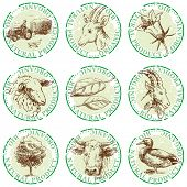 natural stamps-hand drawn labels