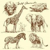 Постер, плакат: дикие животные