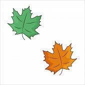 Green And Orange Maple Leaves, Colorful Illustration Autumn Leaves On The White Background poster