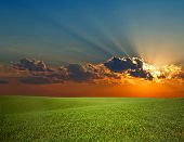 stock photo of green-blue  - An image of sunrise and green field - JPG