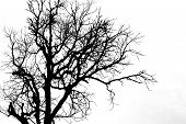 pic of dead-line  - A silhouette tree is isolated on white background - JPG
