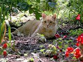 Cat Resting In The Summer Flower Garden poster