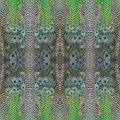 foto of indian peafowl  - Beautiful background made from Green Peafowl feathers - JPG