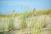 stock photo of dune grass  - Sand dunes - JPG