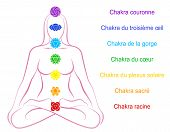 picture of plexus  - Seven main chakras   - JPG