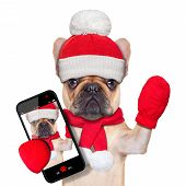 picture of christmas dog  - fawn bulldog dog as santa claus on christmas taking a selfie and waving with hand isolated on white background - JPG