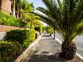 foto of palm  - Palm trees in the Palm Mar empty street - JPG