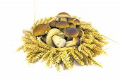 foto of fall-wheat  - wheat ears crown wreath and fresh mushroms cep boletus isolated on white - JPG