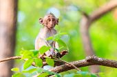 stock photo of macaque  - Little Monkey (Crab-eating macaque) on tree in Thailand