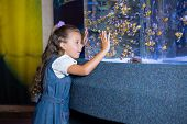 pic of inquisition  - Little girl looking at fish tank at the aquarium - JPG