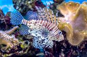foto of algae  - The underwater world - JPG