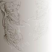 image of dreamcatcher  - Dreamcatcher  - JPG