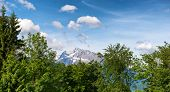 picture of snow capped mountains  - Close up of green tree tops - JPG